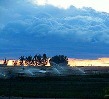 A.M. Blue's..Farm Country...Caldwell, Idaho by trueblvr