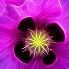 Poppy in Pink by Bel Menpes