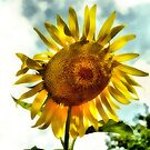 Sunflower by SuddenJim