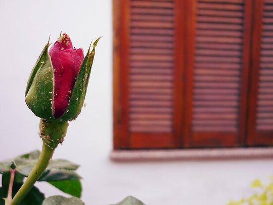 No Rose is JUST a Rose... by Denis Marsili - DDTK