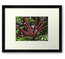 Jungle's Colours - Colores De La Selva Framed Print