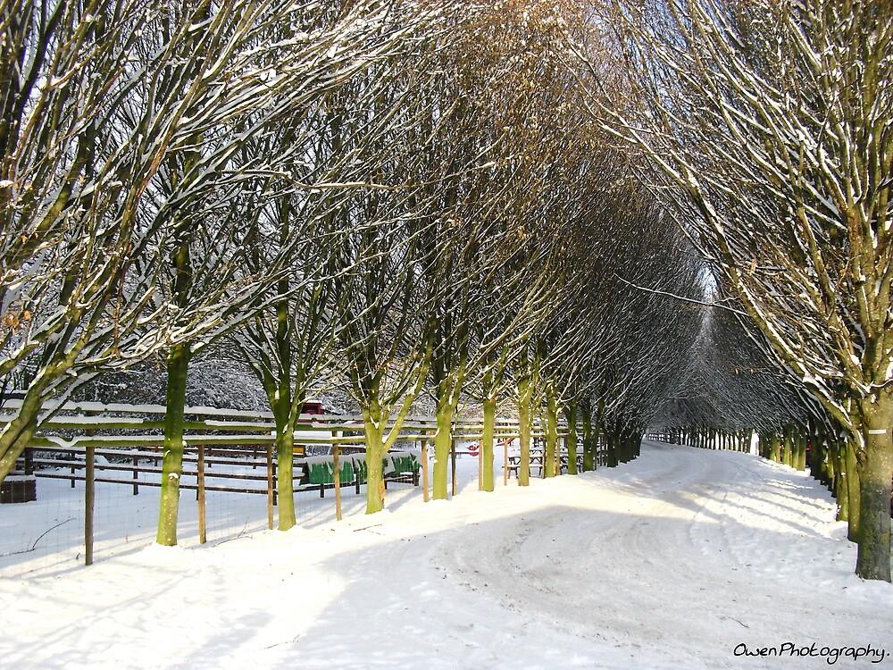 Winter snow scene by missemilyo