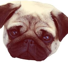 Little Pug by Odd Clothing