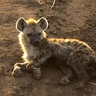 Young Spotted Hyena by Michal Cerny