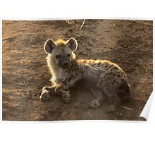 Young Spotted Hyena Poster