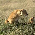 Lioness with cub by Michal Cerny