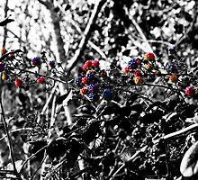 Berries by Paul Howarth