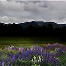 Lupine Dusk before Franconia Ridge by Wayne King
