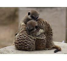 Meerkat Huddle Photographic Print
