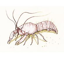 The Enigmatic Lobster Photographic Print