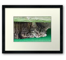 cute cat sleeping under the bench Framed Print