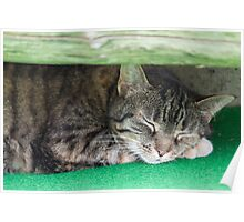 cute cat sleeping under the bench Poster