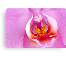 Beautiful pink orchid Canvas Print