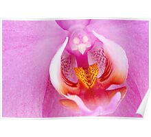 Beautiful pink orchid Poster