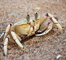 Ghost Crab by Craig Higson-Smith