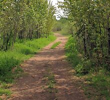 Trail through Aspens by Jim Sauchyn