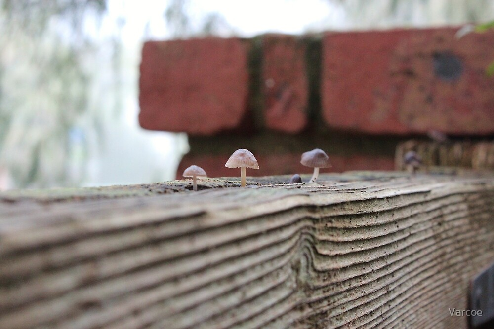 Tiny fungi. by Jeanette Varcoe.