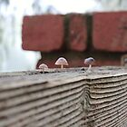 Tiny fungi. by Jeanette Varcoe