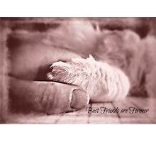 Best friends are forever Photographic Print