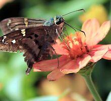 Butterfly by Unelanvhi