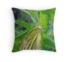 White Cabbage Butterfly - Pieris rapae Throw Pillow