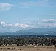 Mount Buffalo from Glenrowan hill 1983 12020013 by Fred Mitchell
