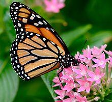 Butterfly Buffet by Ainsley Kellar Creations