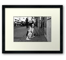 Dirty Water Dog Framed Print
