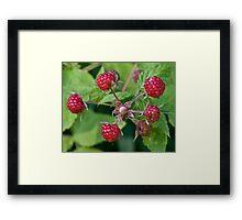 Wild Rasberries Framed Print