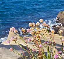 Coastal Thrift and Ocean View by John Butler