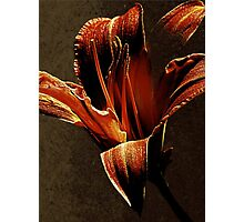 Evening Twinkle Twinkling Photographic Print