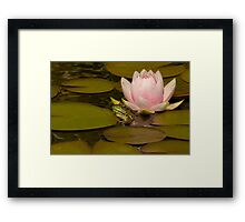 Kermit Meets Lily Framed Print