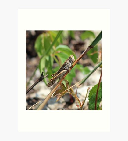 Grasshopper in the Everglades Art Print