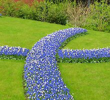 Advance of the Muscari - Keukenhof Gardens by MidnightMelody