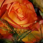 Rose by Nicole  Markmann Nelson