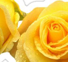 yellow roses Sticker