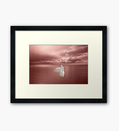 Flamingo Duet Framed Print