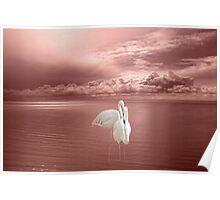 Flamingo Duet Poster