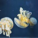 Jelly fish  by Karlim