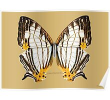 Common Map Butterfly Poster