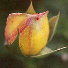 Rose Bud with Texture by Robert Armendariz
