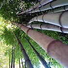 Bamboo Forest by Nancy Aranda