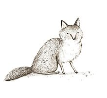 Swift Fox Sketch by Sophie Corrigan