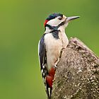 Great Spotted Woodpecker by M.S. Photography & Art
