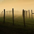 Fading Into the Fog by Douglas  Stucky