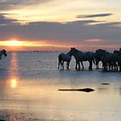 Early morning in the Camargue by Charlotte Jarvis