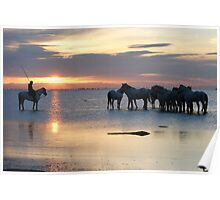 Early morning in the Camargue Poster