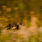 Wood Ducks by Don Marshall