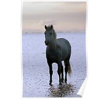 Horse at Sunrise Poster