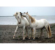 White Horses 2 Photographic Print